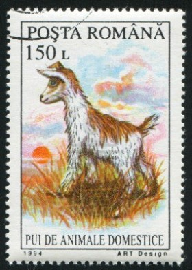10838632-romania--circa-1994-stamp-printed-by-romania-shows-kid-goat-circa-1994