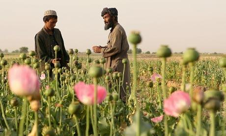Afghans-in-a-poppy-field--001