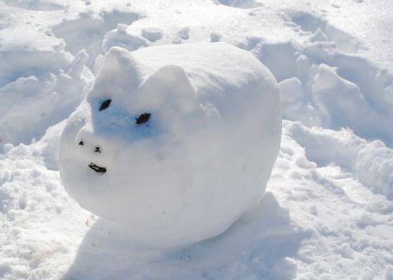 Snow-Pig-598x427
