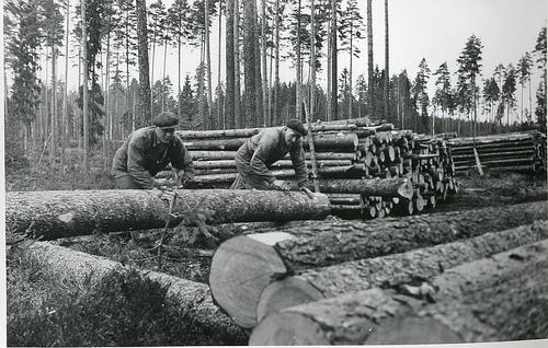 skogsarbeid-norske-flyktninger-i-sverige