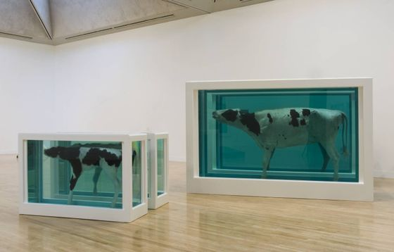 Mother and Child Divided exhibition copy 2007 (original 1993) Damien Hirst born 1965 Presented by the artist 2007 http://www.tate.org.uk/art/work/T12751