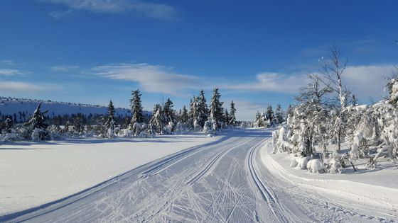Birkebeinerløypa ved Midtfjellet i retning Sjusjøen og Lillehammer.