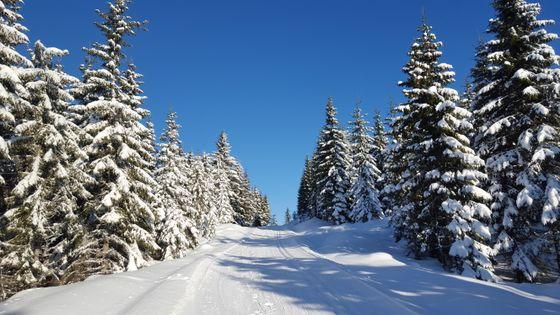 Motbakker gjennom skogen på vei til Stenfjellet.