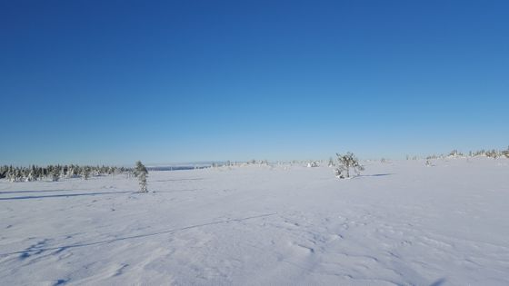 Snøen ligger som silke over Hedmarksvidda.