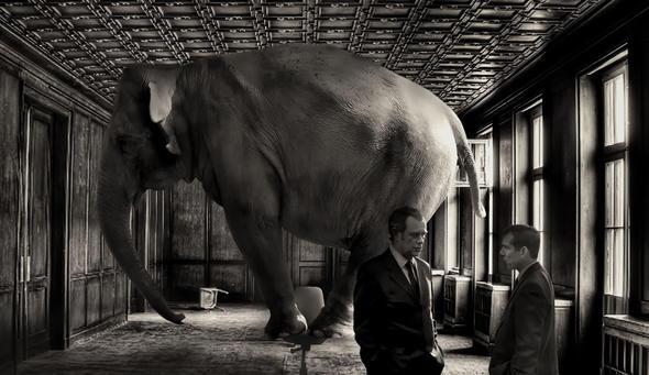 elefant-david blackwell