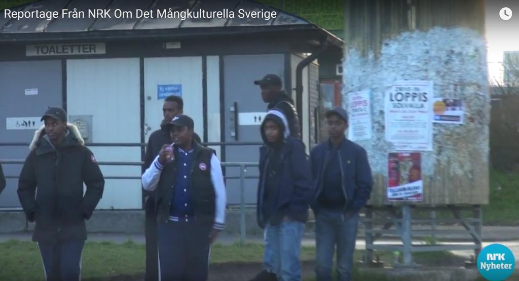 NRK reportasje fra Husby7