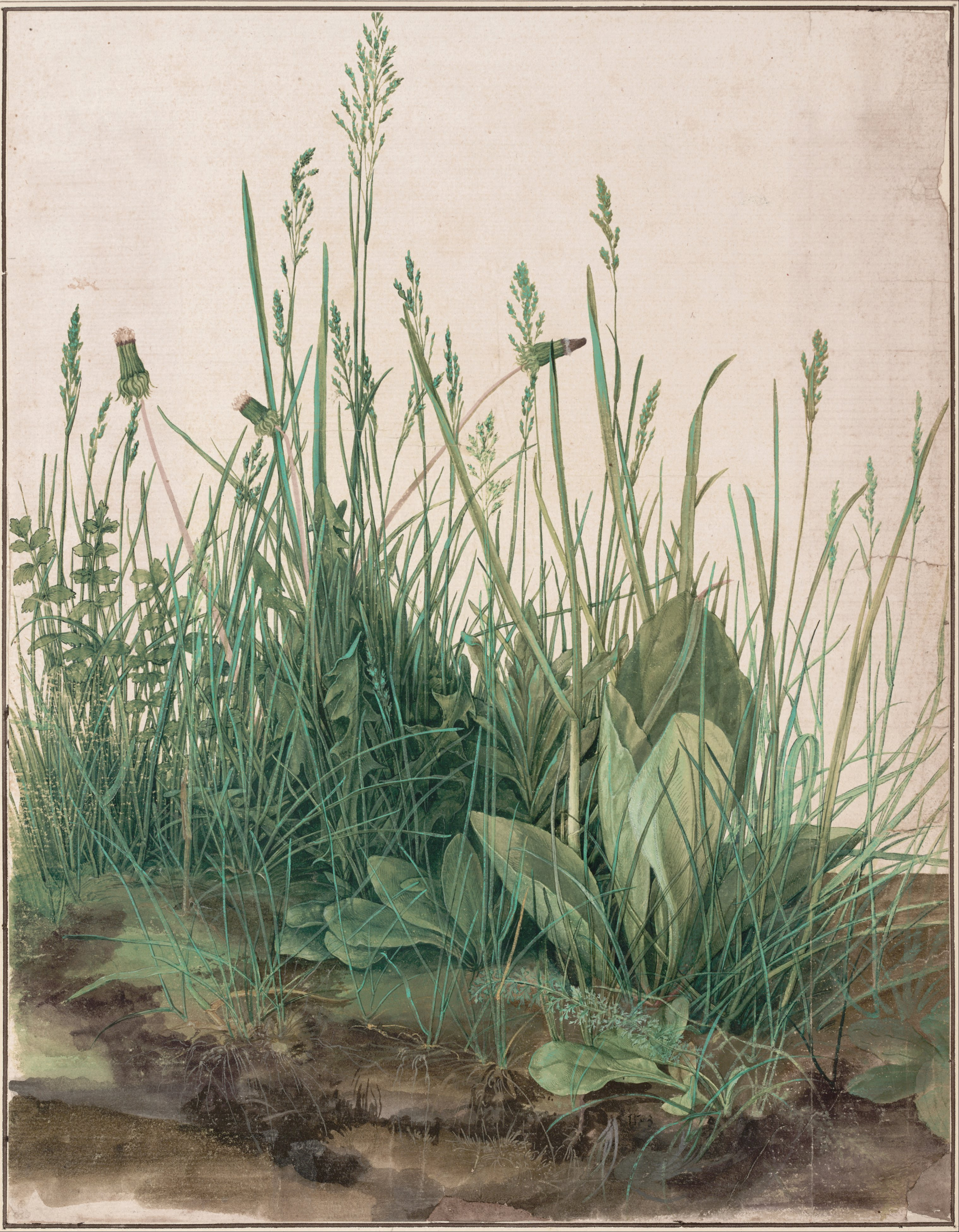 Albrecht_Dürer_-_The_Large_Piece_of_Turf,_1503_-_Google_Art_Project