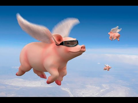 pigs.can.fly
