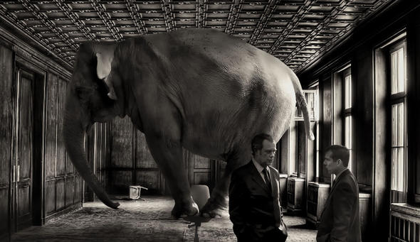 elefant-david-blackwell
