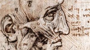 leonardo-da-vinci-drawing